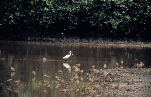 Buloh wetland reserve